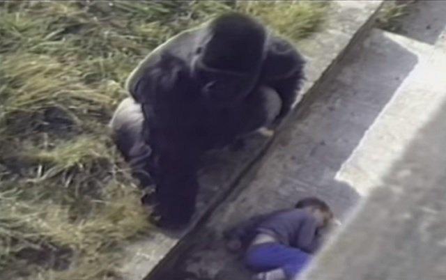 gorilla-kisfiu2