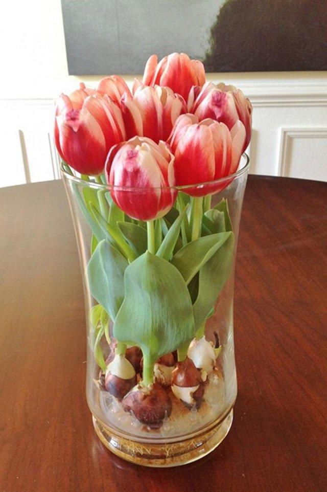 Így nevelj otthon tulipánokat üvegvázában!
