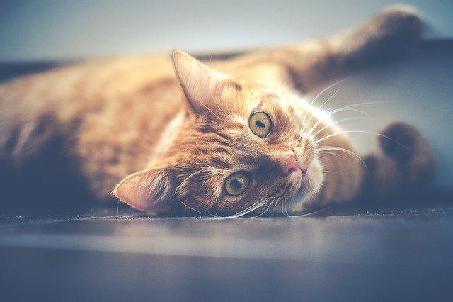 Így jelzi a macska, ha negatív energiákat tapasztal egy lakásodban!