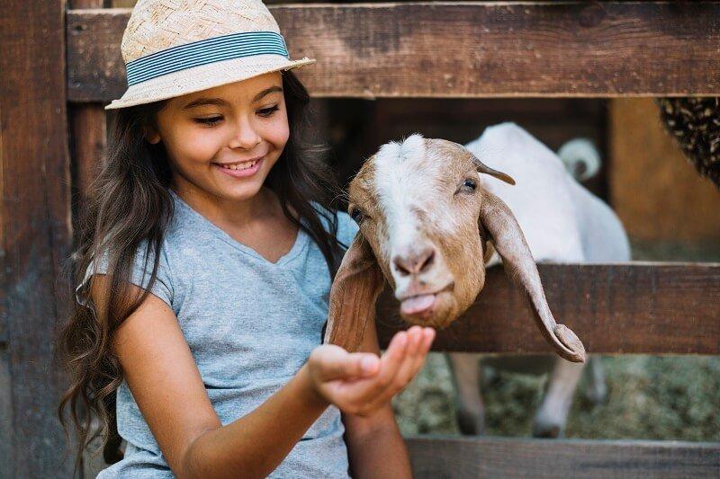 A spanyolországi iskolákban új tantárgyat vezettek be - az állatok iránti tiszteletet is tanítani fogják
