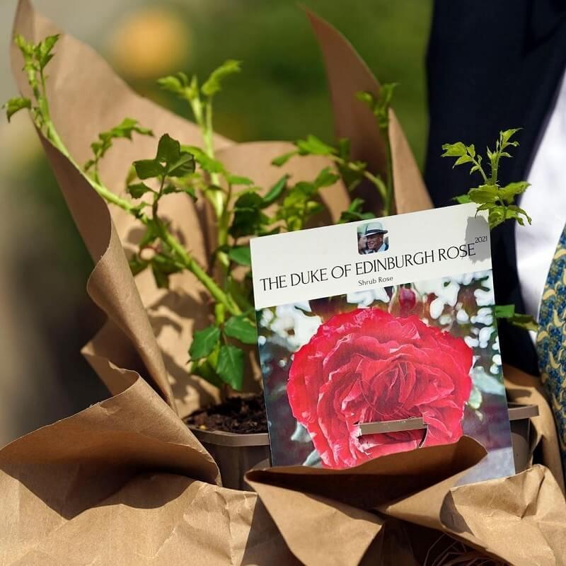 Erzsébet királynő rózsát ültetett a nemrég elhunyt Fülöp herceg 100. születésnapján