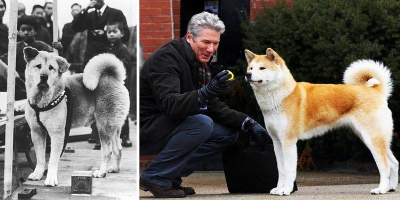 Hachiko, a hűséges kutya, aki 9 éven át várta haza gazdáját, miután az meghalt!