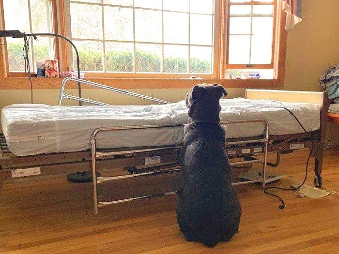 Egy hűséges kutya napokig ült a gazdája kórházi ágya mellett, miután az meghalt