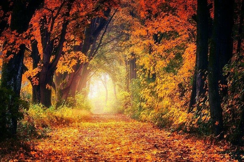 2021. szeptember 22.: az őszi nap-éj egyenlőség lelki hatásai!