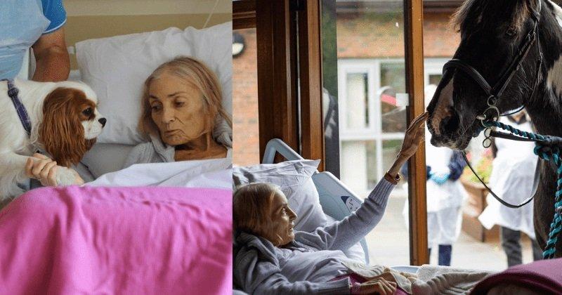 Megható pillanat: végső búcsút vesz kutyáitól és lovától a haldokló idős hölgy